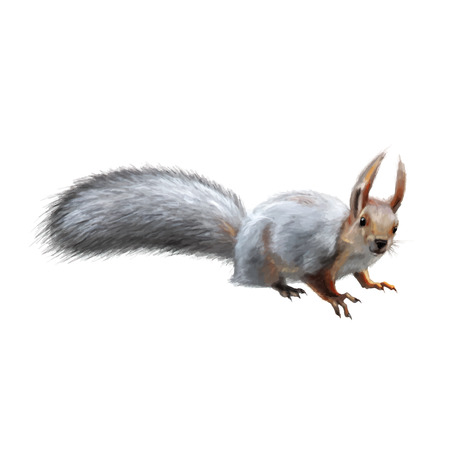 white tail deer: young squirrel on white background vector