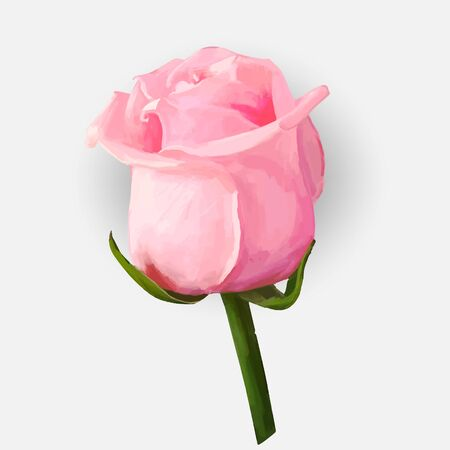 two dimensional: Rose blossoming bud isolated  illustration
