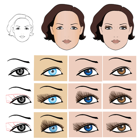 brown eyes: scheme for makeup eyelashes, female face on white background vector isolated