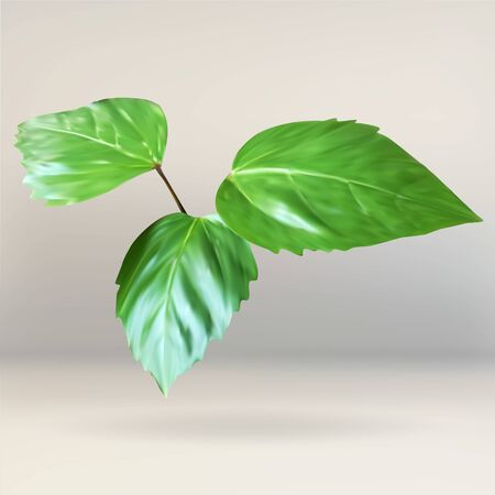 set going: green leaf, branch leaves, plant, vector icon, isolated object