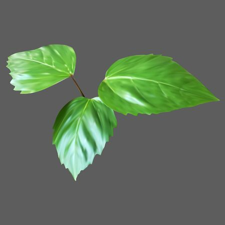 no edges: green leaf, branch leaves, plant, vector icon, isolated object