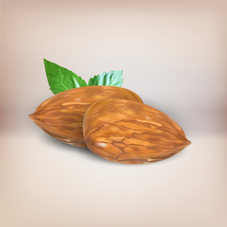 almonds: almonds vector object isolated icon