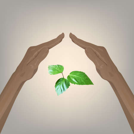 lay: hand lay up leaves sprout vector nature protection Illustration