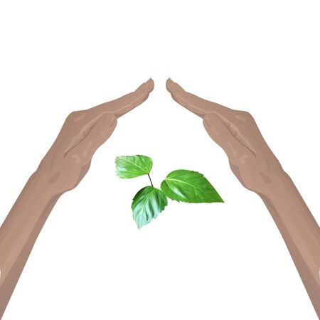 hand lay: hand lay up leaves sprout vector nature protection Illustration