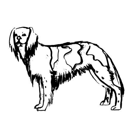 malamute: dog vecto