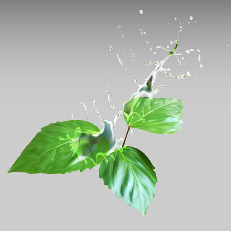 drops of water: Leaves water drops vector