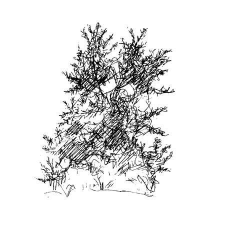 ink sketch: deciduous tree, graphic design sketch pen ink