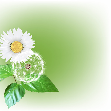 seeds: white dandelion seeds, nature, vector