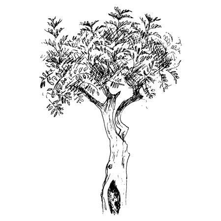 pen and ink: deciduous tree, graphic design sketch pen ink vector