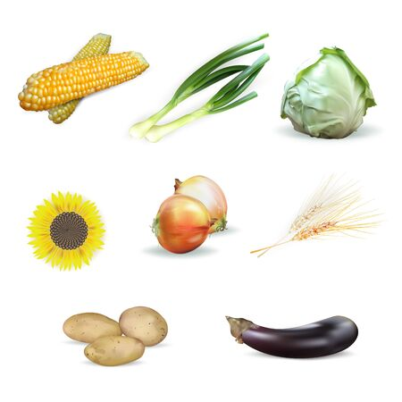 kale: cabbage, corn, sunflower, ears of wheat, potatoes, set of vegetables, isolated vector, eggplant, green onion