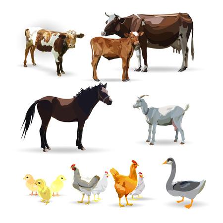 Cow Calf brown, vector. Goose, horse, chicken