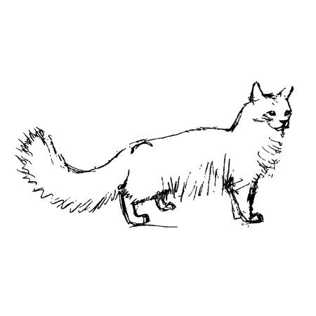 stroking: fluffy angora cat vector