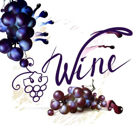 winemaking: Bunch of Grapes berries vector