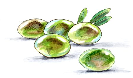 olive green, fruits and leaves, drawing