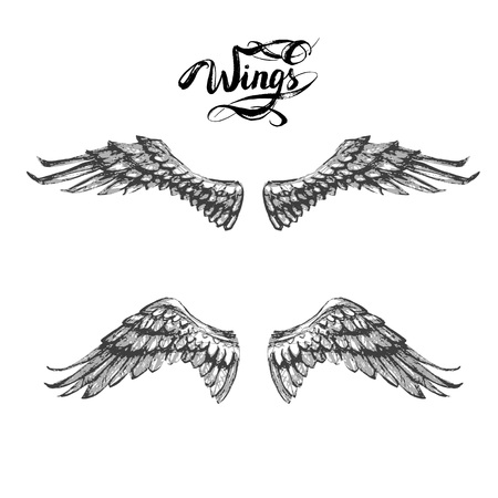 Angel wings, lettering, drawing vector.