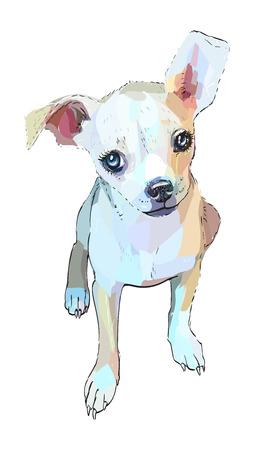 dog vector  head avatar Stock Photo