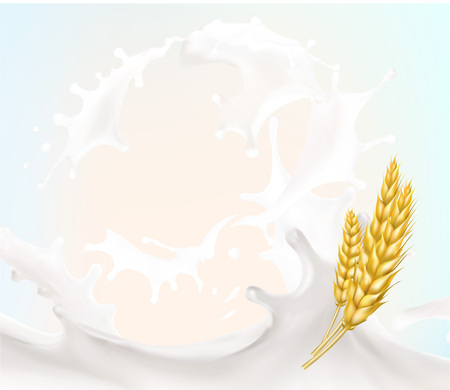 wheat spike milk splashes isolated illustration vector