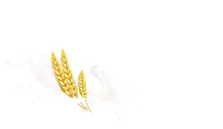 wheat spike milk splashes isolated illustration