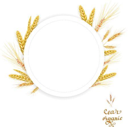 wheat illustration print design template Illusztráció