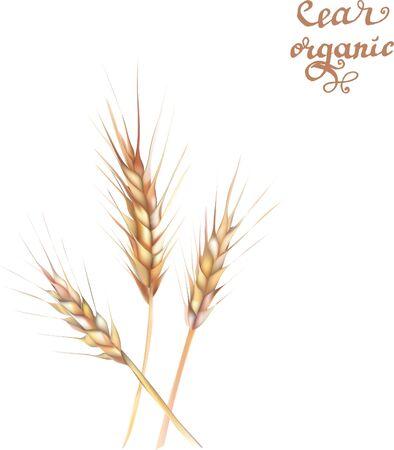 wheat illustration print design template Vetores