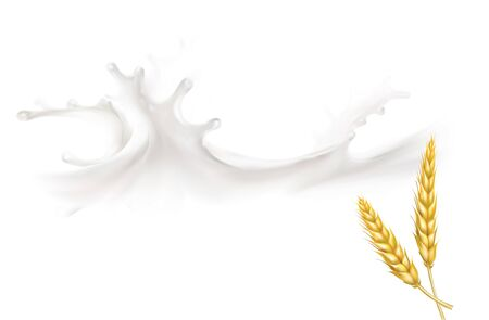 wheat spike milk splashes isolated illustration vector