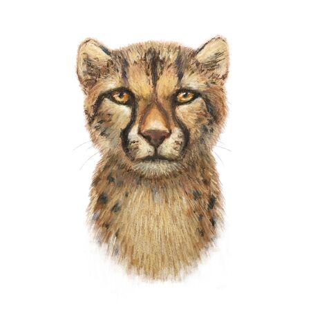 cheetah illustration head author pastel crayons