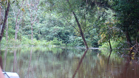 Mirror duplicate in the middle of the jungle river.