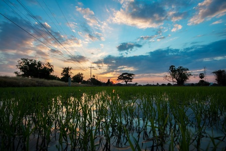 Rice field in the evening in Thailand   photo