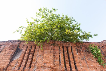 revetment: tree on brick wall background