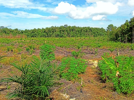 palm garden: Palm garden