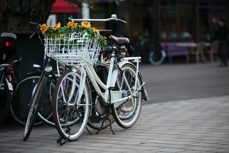 apparently: Flower can apparently bloom on bikes
