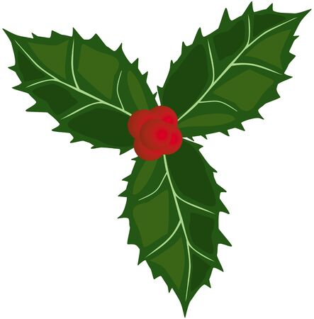 wiccan: Holly green leaves and red berries