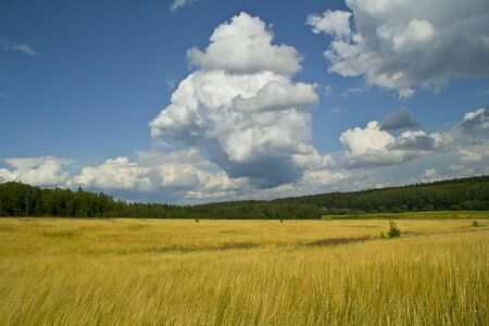 Russian landscape  Field and forest  near village Barybino, Serpukhov district Stock Photo - 14503378