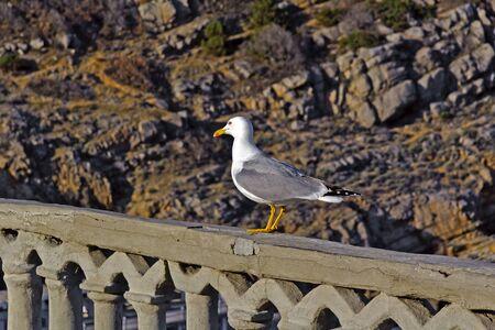 parapet: Seagull sits on a parapet of viewing platform of the castle Swallow Nest, Crimea Stock Photo