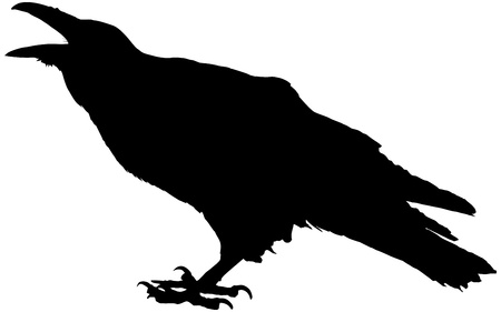 samhain: Cawing raven vector silhouette Illustration