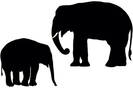 Adult and calf Indian elephant, vector silhouette