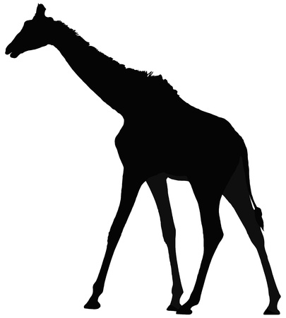 Vector silhouette of giraffe