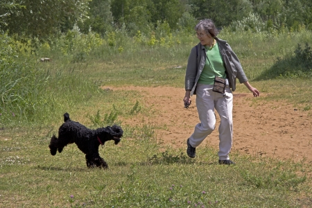 Aged sportive woman walks and plays with kerry-blue-terrier puppy