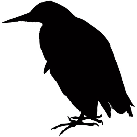 bulrush: Bittern bird, black silhouette Illustration