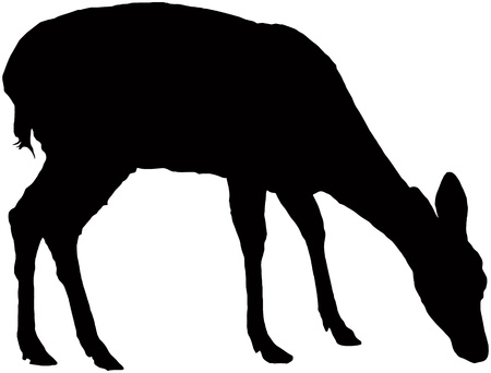 cervidae: Pasturing little fawn, black  silhouette Illustration