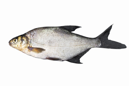 abramis: Common bream (Abramis brama), isolated on white