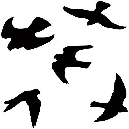 Flying falcon, set of the black vector silhouettes Illustration