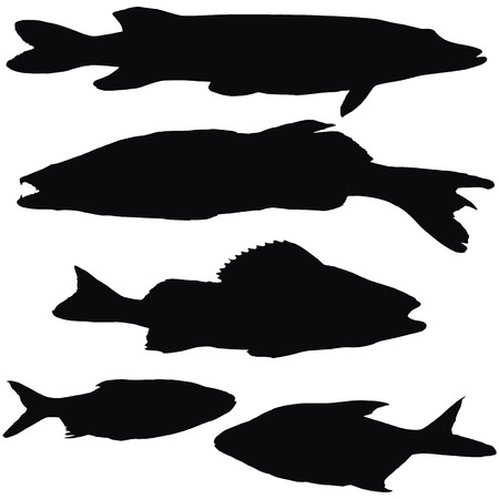 European fishes: pike, zander, perch, roach, bream, set of black vectoe silhouettes Illustration