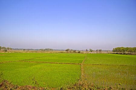 Rice field in Orissa, close to Brahmagiri Stock Photo