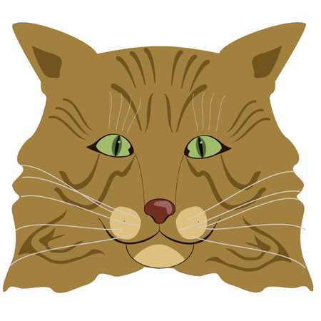 attentive: Cartoon portrait of the red Maine coon cat Illustration