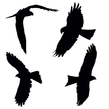 Flying pariah, or black kite, set of the black vector silhouettes Illustration