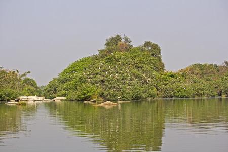 bird sanctuary: FEBRUARY 23, 2014, INDIA, KARNATAKA, RANGANATHITTU BIRD SANCTUARY - Bird sanctuary on the islands of river Kaveri