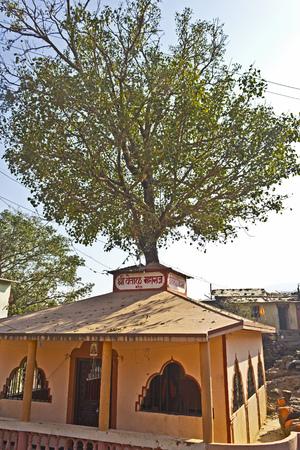 devanagari: FEB 5, 2015, TRIMBAK, INDIA - Temple of Vetala Maharaj. Vetala is a ghost living in a tree.