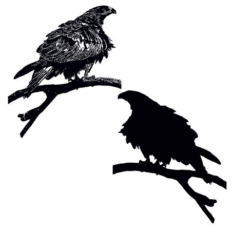 black kite: Pariah or Black kite (Milvus migrans) on a tree, imitation of an ink graphics and black silhouette