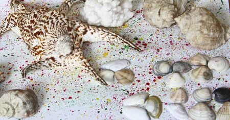 Cockleshells and stones on a colour background